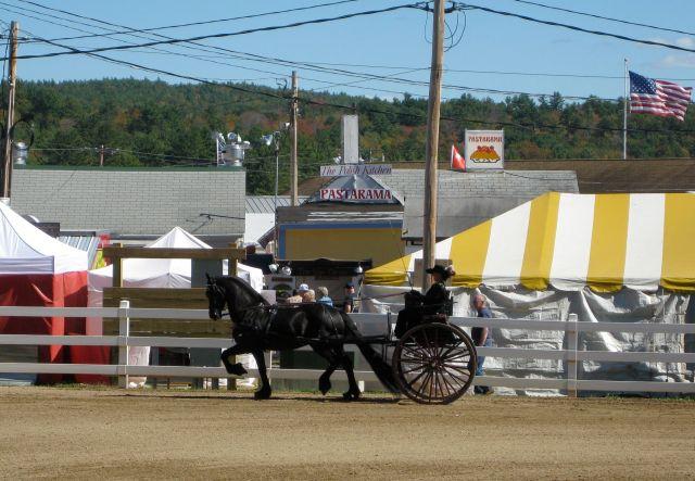 Friesian horse and hackney cart
