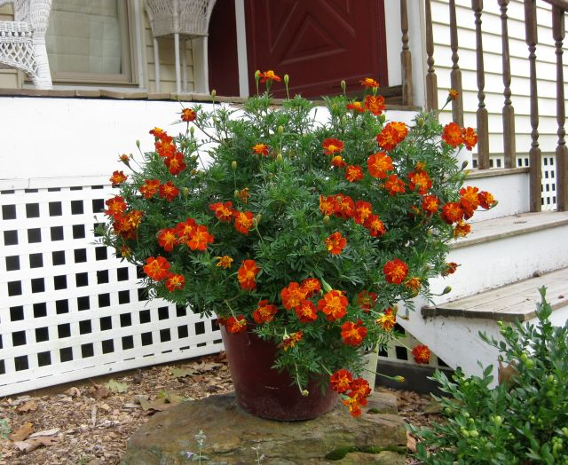 Porch planter