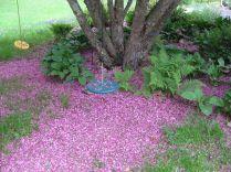 Apple blossom mulch