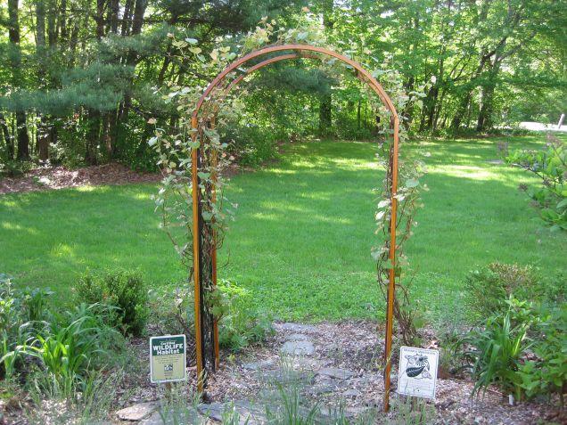 Concord grape arbor