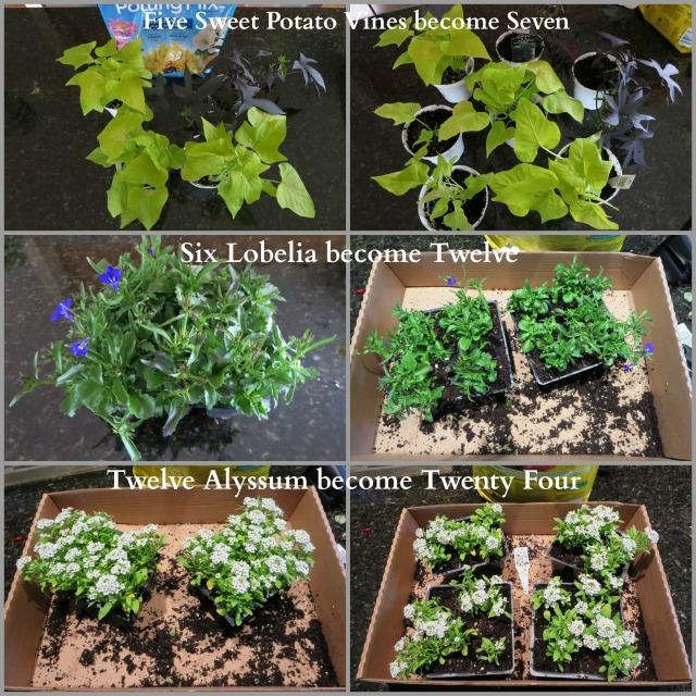 PlantCollage