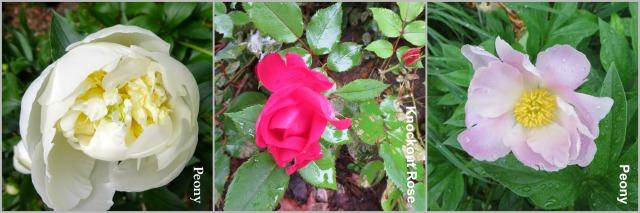 Flower2Collage