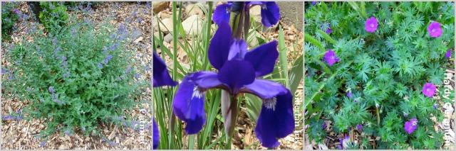 Flower3Collage