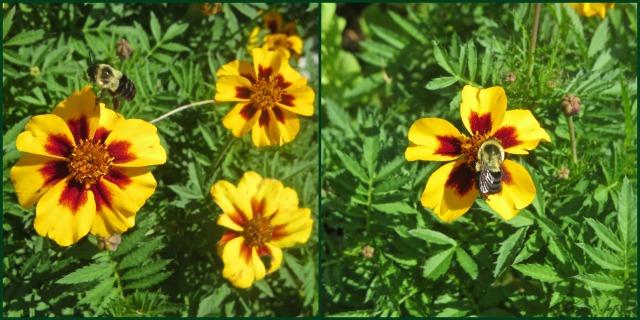 PollinatorCollage