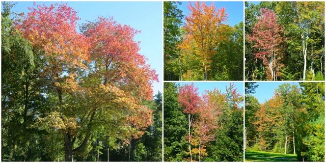 TreeCollage