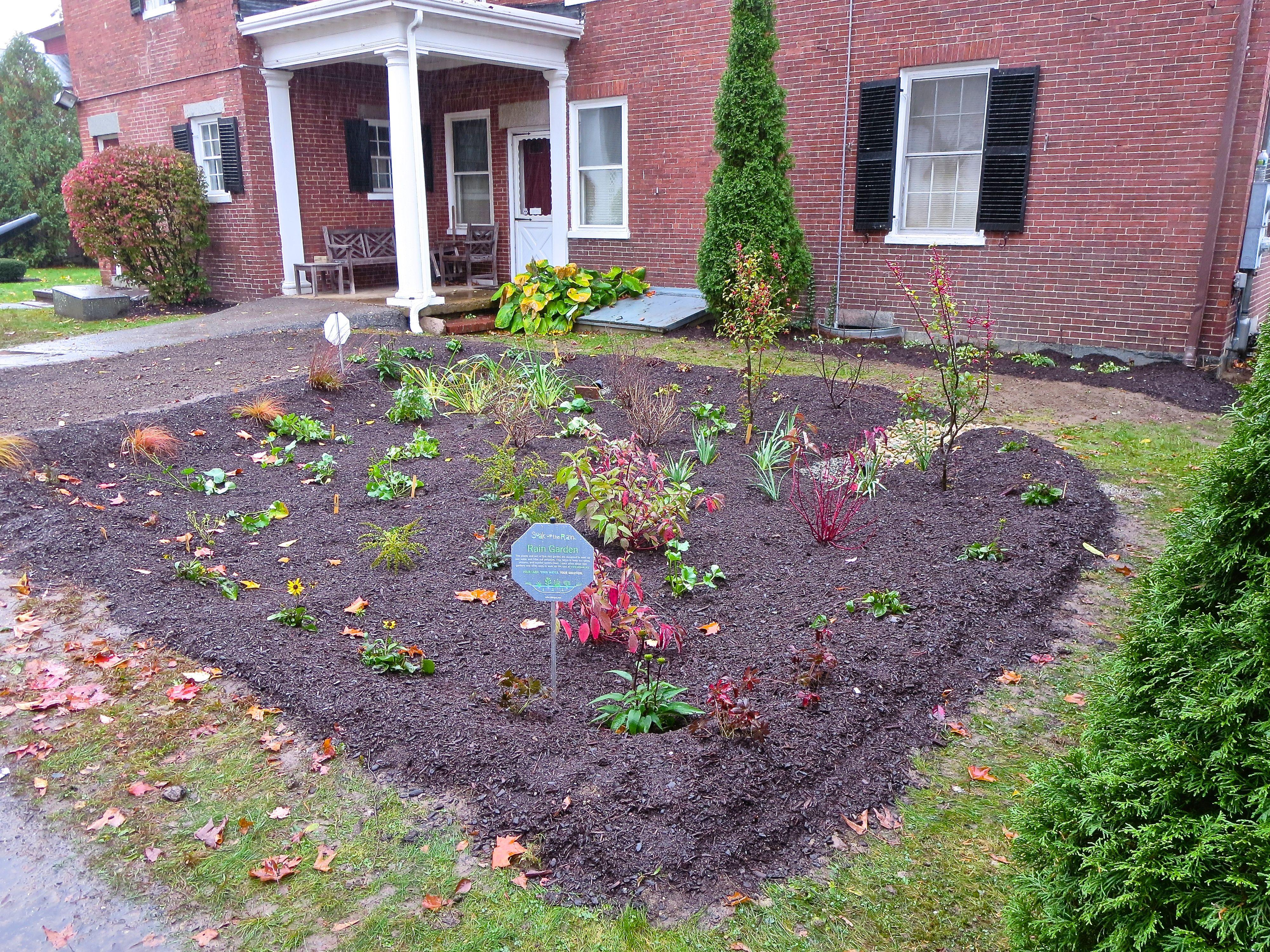 Rain garden newenglandgardenandthread for Home rain garden design