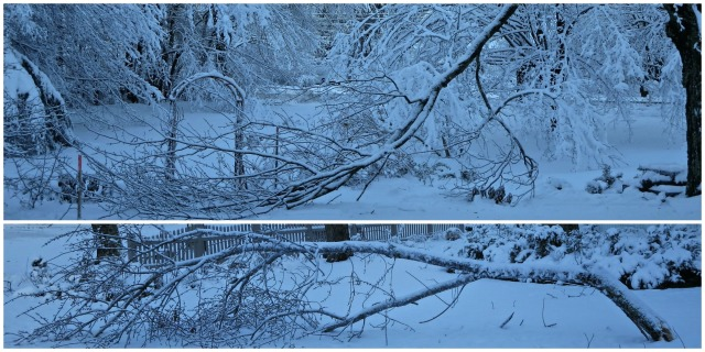 Snow3Collage