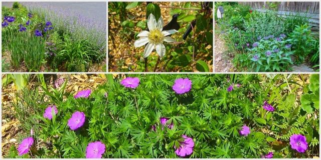 Garden1 Collage