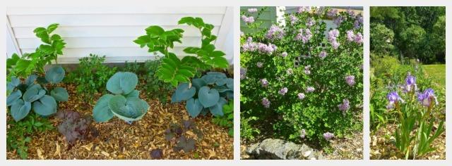 Garden2Collage