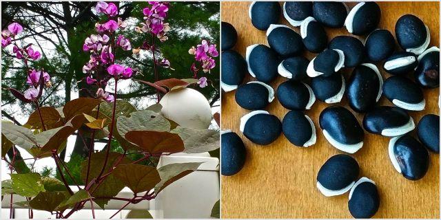HyacinthCollage