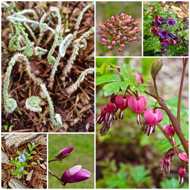 Spring Fotor