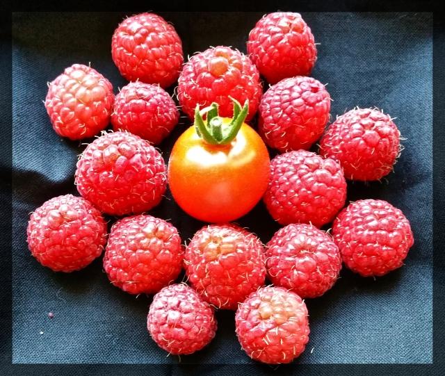 2016-07-19 15_FotorRaspberry