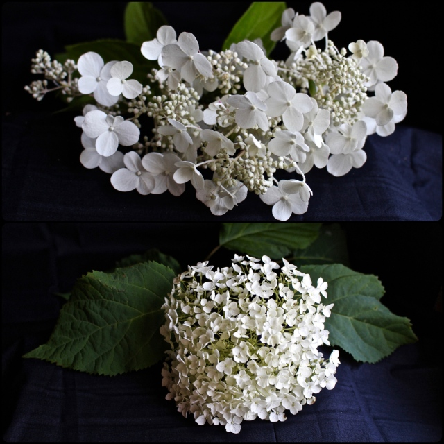 Collage_FotorHydrangea
