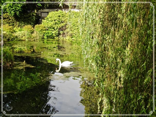 Ireland Swan
