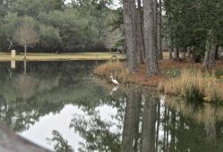 Egret is fishing