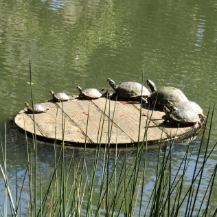 Small, medium, and large turtles just for Joyce
